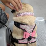 Happy Dog Reflective Harness photo review